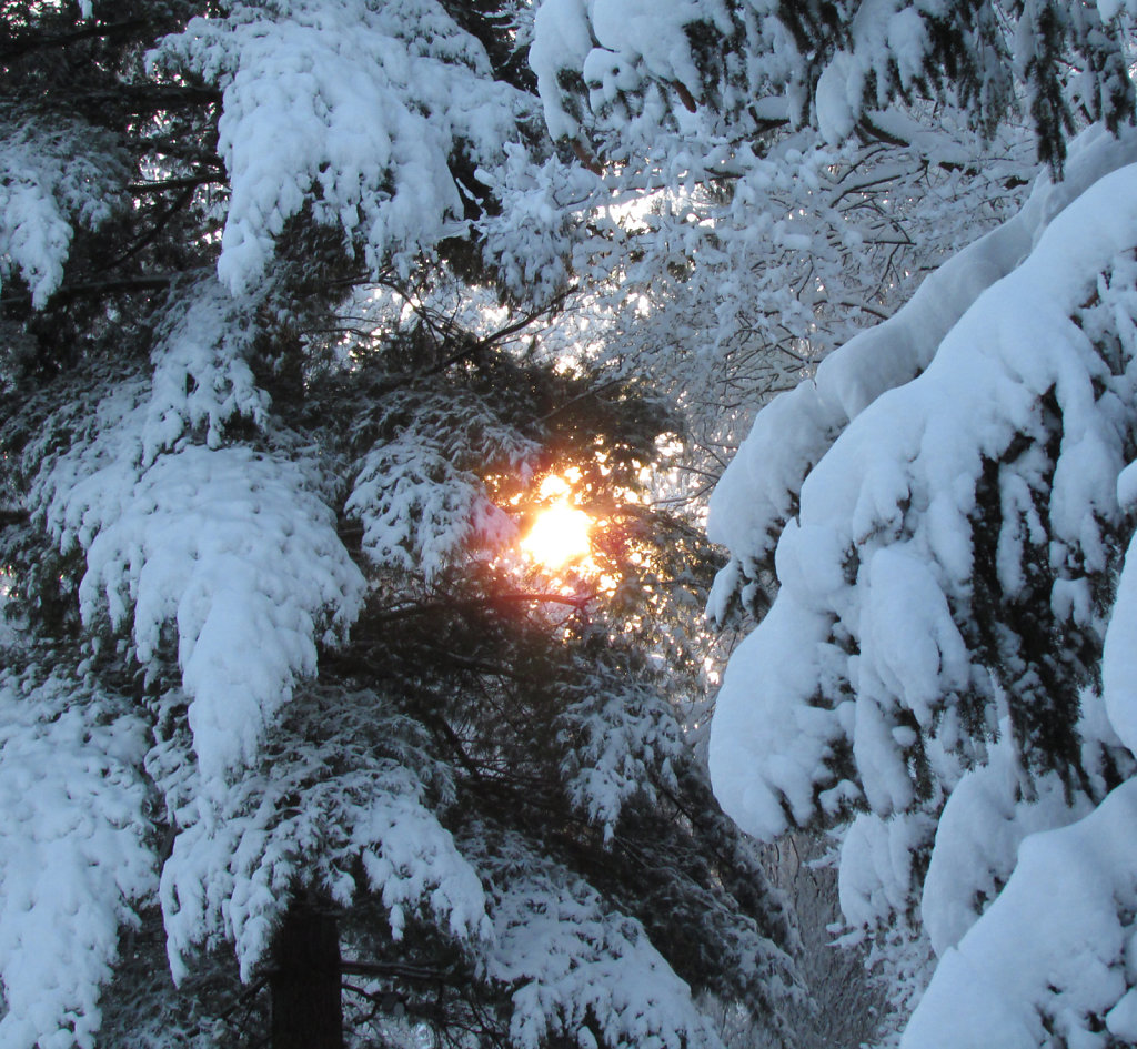 Sun peeking through snow covered trees.
