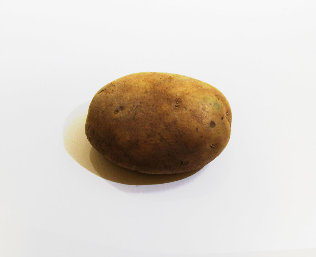 Lone potato on a white background