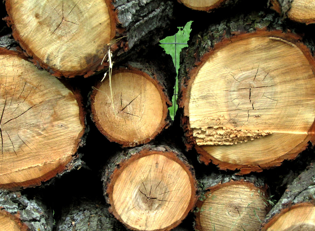 Pile of cut logs stacked along a fence