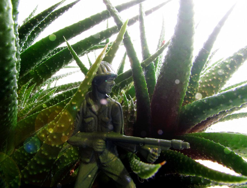 Plastic Army man hiding in an aloe plant
