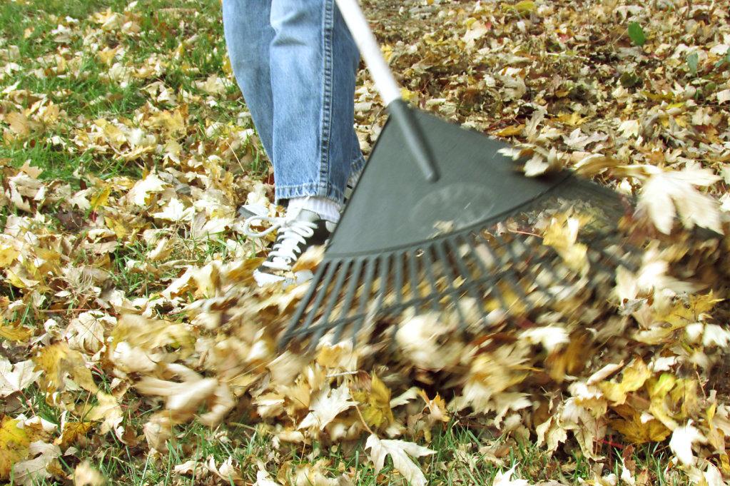 Fall leaf raking