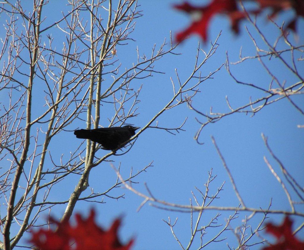 Black bird on a branch