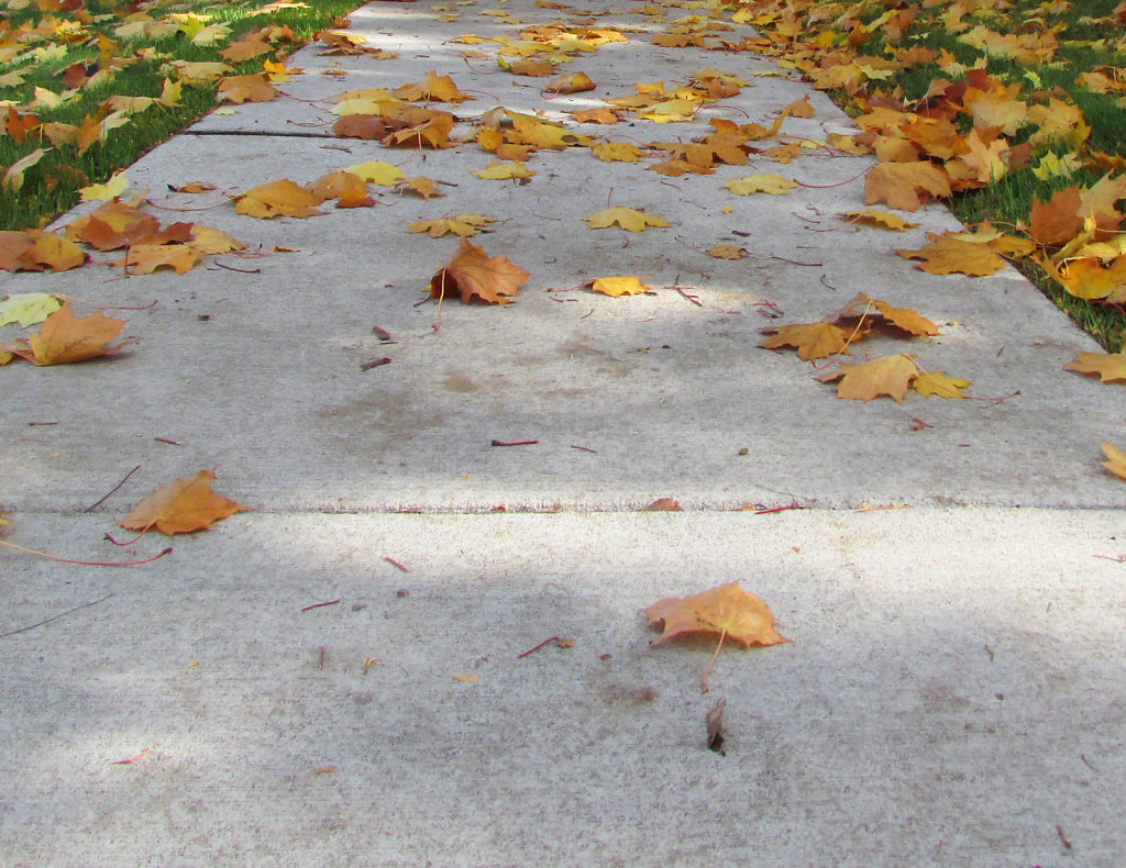 leaves on a sidewalk