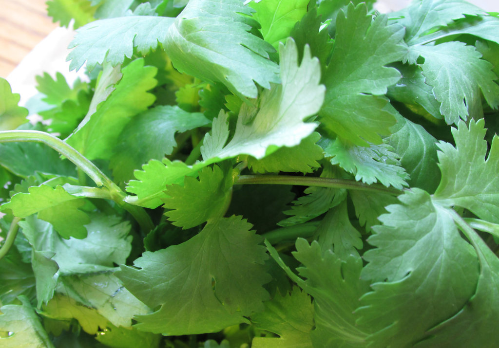 green herbs fresh