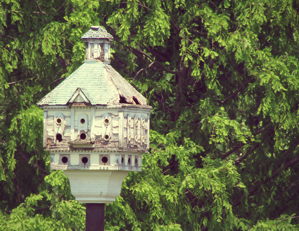 Bird house with trees