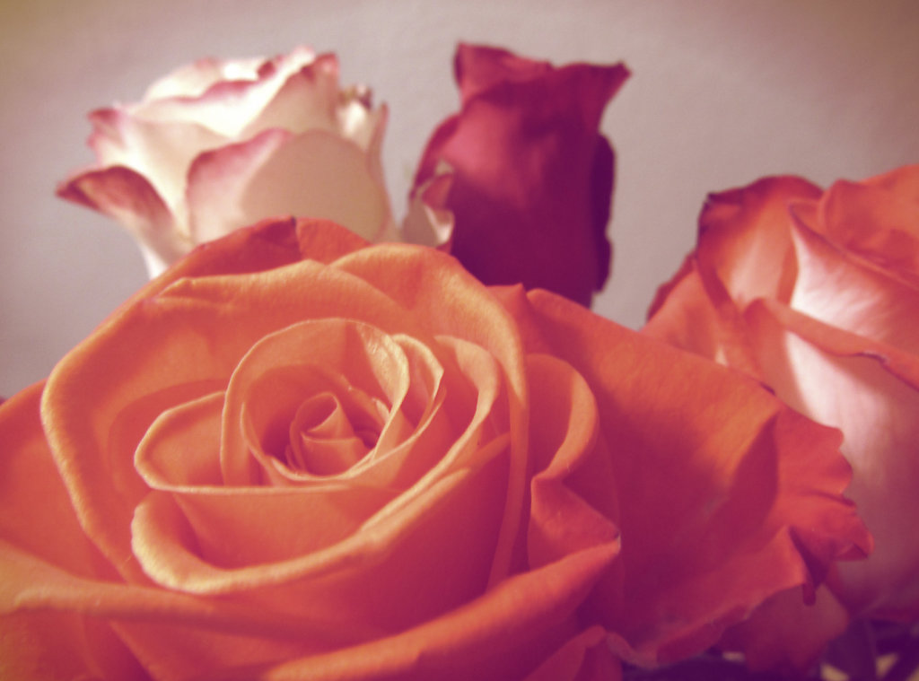Muted colors and roses
