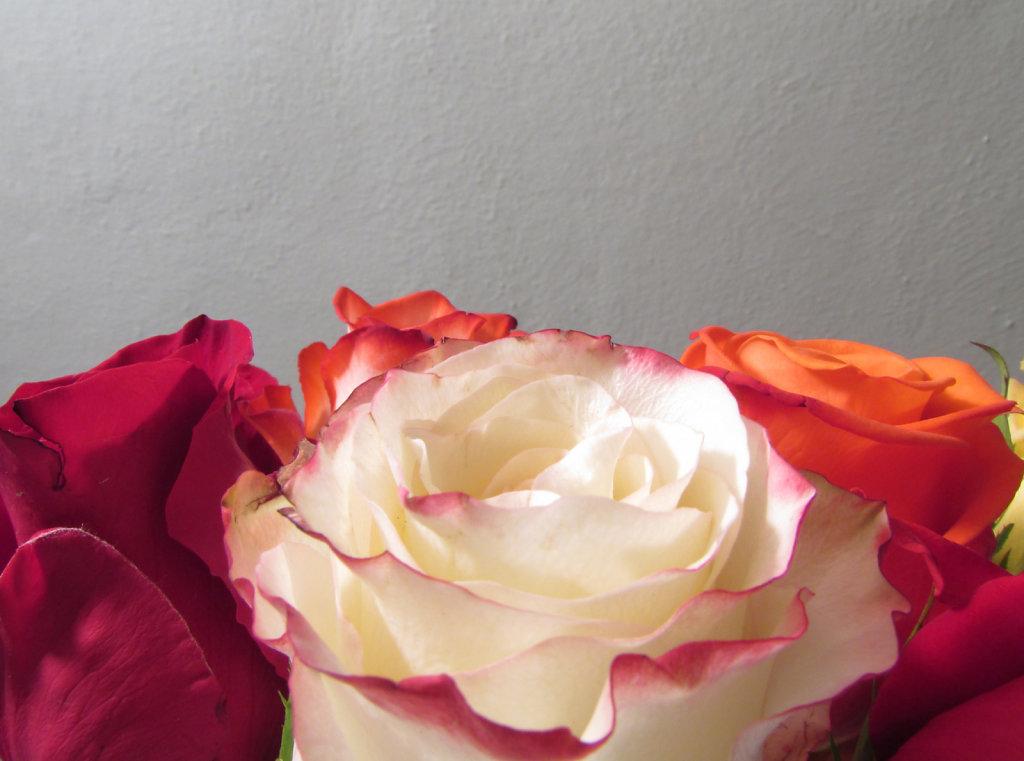Bottom rose border