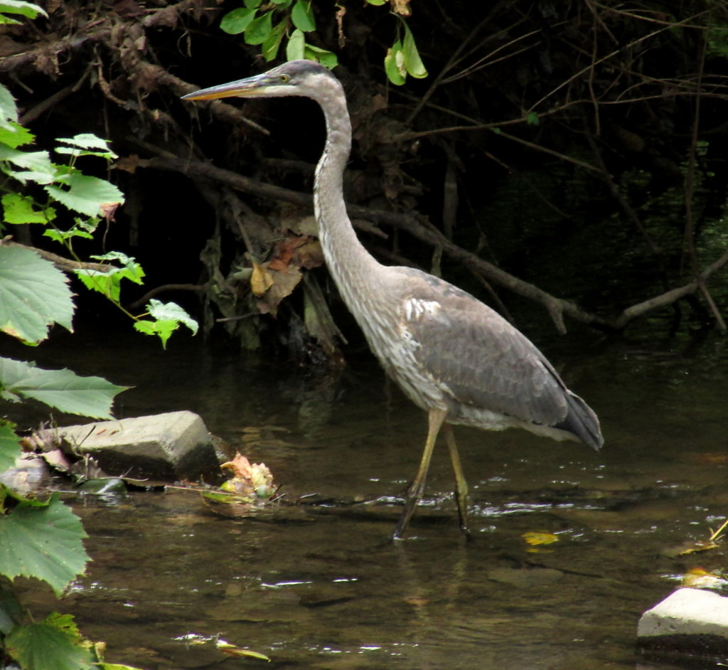Crane in a creek stock image